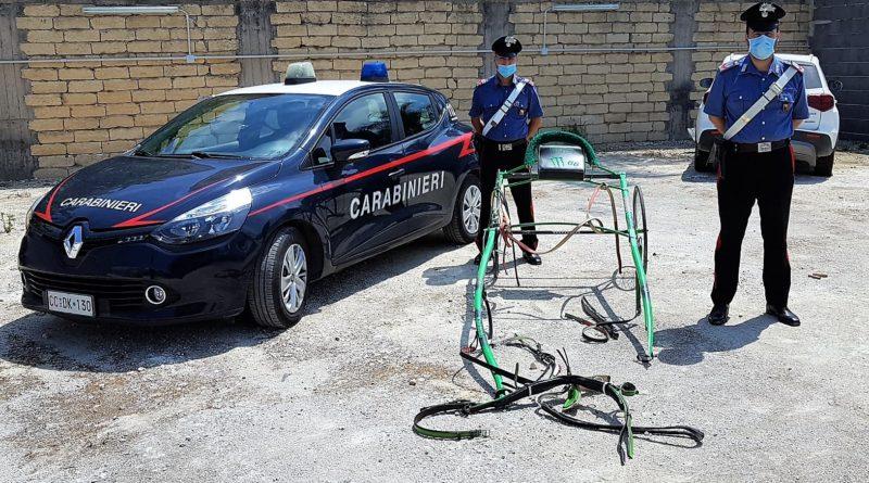 Carabinieri interrompono corsa clandestina di cavalli
